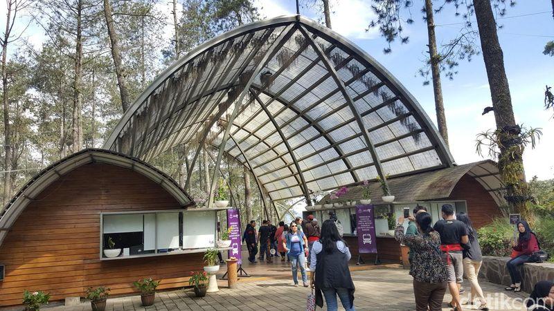 Orchid Forest merupakan hutan pinus yang berada di Cikole, Bandung. (Syanti/detikTravel)