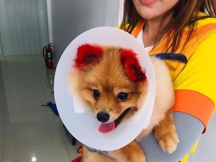 Diffy, anjing yang kupingnya lepas karena diwarnai. (Foto: Facebook)