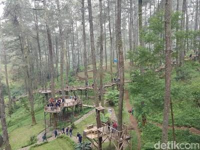 Liburan Dadakan ke Bandung, ke Orchid Forest Saja Yuk