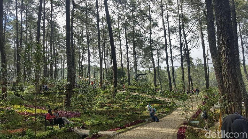Foto: Hutan Pinus Paling Instagramable di Bandung