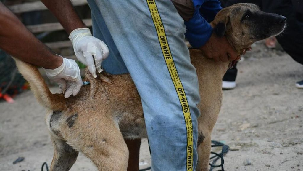 KLB Rabies, 264 Ekor Anjing di Sumbawa NTB Disuntik Mati