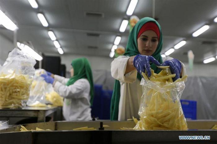 Tampak para wanita Palestina sedang menimbang kentang goreng di pabrik Rosetta di kota Beit Hanoun di Jalur Gaza Utara. Istimewa/Xinhuanet.