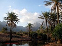 Namanya Pulau Socotra. Salah satu pulau terunik di dunia, karena bentangan alam dan tumbuh-tumbuhannya yang tidak ditemukan di tempat mana pun di Bumi. (socotra.ru)