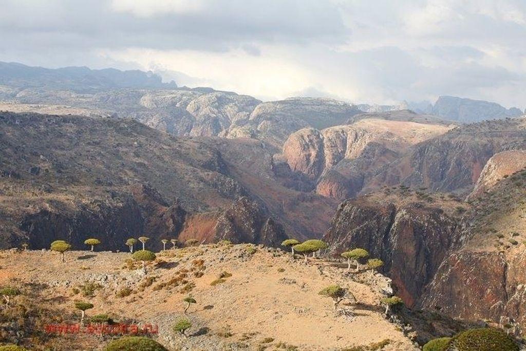Socotra adalah salah satu pulau yang masuk ke dalam teritori Yaman. Foto: Beth Moon