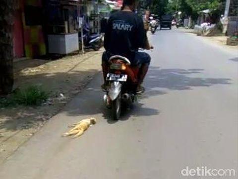 Ngeri! Di Pekalongan Terekam Orang Seret Kucing Pakai Motor