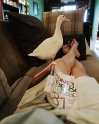 Beli Telur Balut, Wanita Ini Malah Menetaskan dan Memelihara Bebeknya