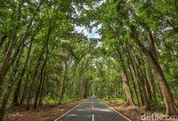Taman Nasional Alas Purwo Eksotis Banget Ya!