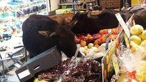Waduh! Supermarket Ini Dipenuhi Oleh Sapi yang Kelaparan