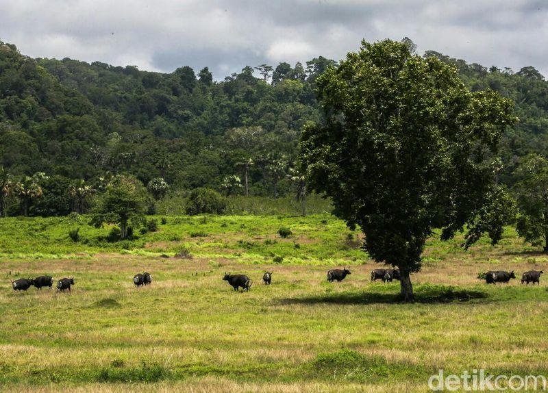 Taman nasional yang luasnya 44.037 hektar ini memiliki banyak keindahan yang bisa dinikmati. Maklum saja kawasan yang telah ditetapkan sebagai Geopark Nasional ini merupakan rumah bagi ratusan jenis flora dan fauna. (Ardian Fanani/detikTravel)