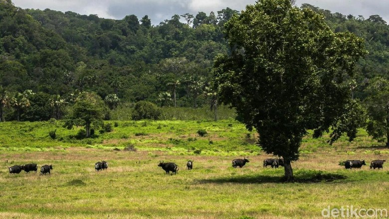 Taman Nasional Alas Purwo di Banyuwangi (Ardian Fanani/detikTravel)