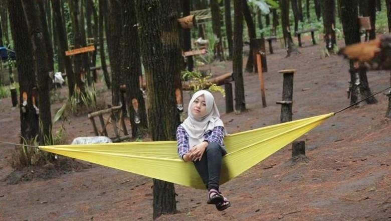 Wisata Hutan Pinus Semeru