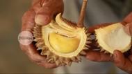 Nyam! Meski Imut Mini Durian Ini Dagingnya Tebal