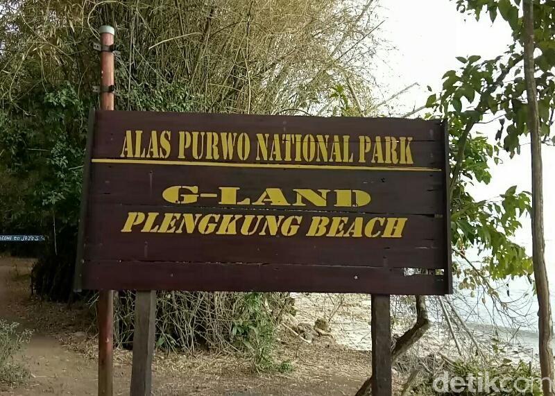 Tempat wisata alam Alas (hutan dalam bahasa Jawa) Purwo berada di ujung tenggara Pulau Jawa, tepatnya berada di Kecamatan Tegaldlimo dan Kecamatan Purwoharjo, Banyuwangi. (Ardian Fanani/detikTravel)