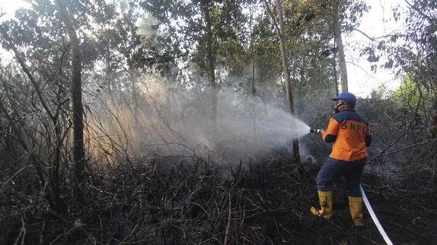 KLHK Tanggapi Debat Capres Jokowi: Masih Ada Kebakaran Hutan