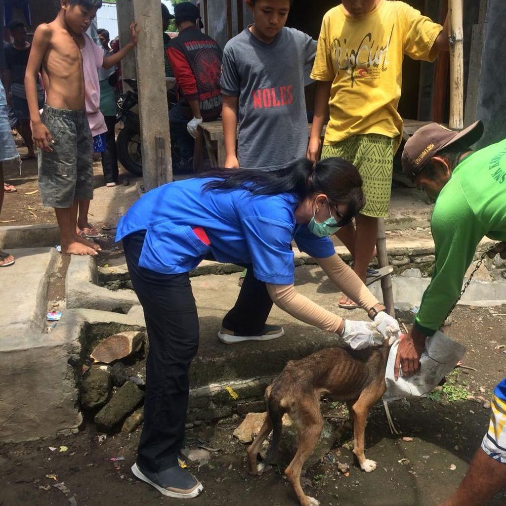 KLB Rabies di Dompu: 1.123 Orang Digigit Anjing, 9 Meninggal Dunia