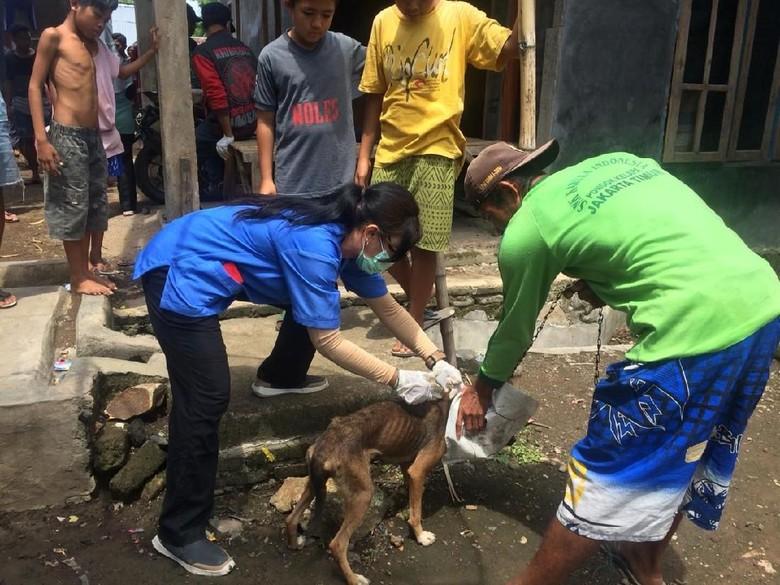 17 Orang Digigit Anjing, Pemkab Sumbawa Nyatakan KLB Rabies