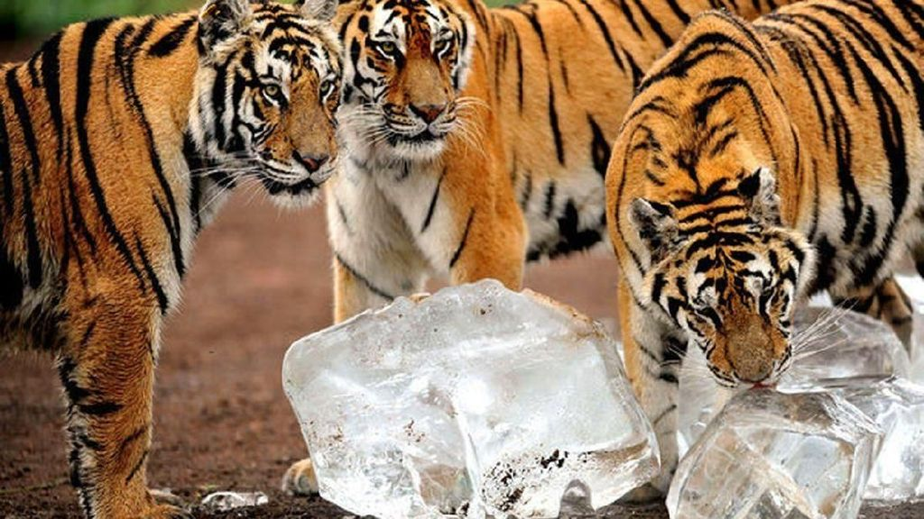 6 Hewan Ini Terancam Punah Karena Jadi Makanan di China