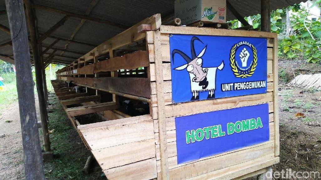 Yang Baru di Ciamis, Hotel Buat Domba