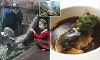 6 Hewan Ini Terancam Punah Karena Kaprikornus Makanan di China