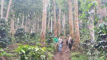 Probolinggo Carikan Rp 500 Jutaan, Bangun Trek Pendaki Argopuro