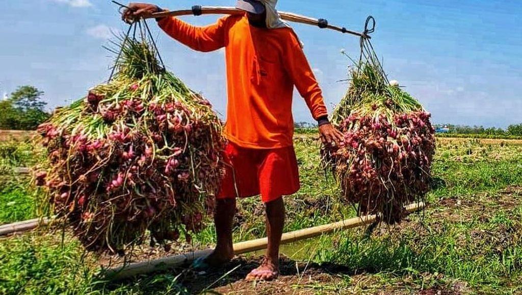 Agar Harga Bawang Merah Membaik, Pedagang Harus Beli ke Petani
