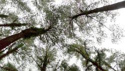 Pengamat Puji Langkah Tegas Jokowi Kurangi Perusakan Hutan