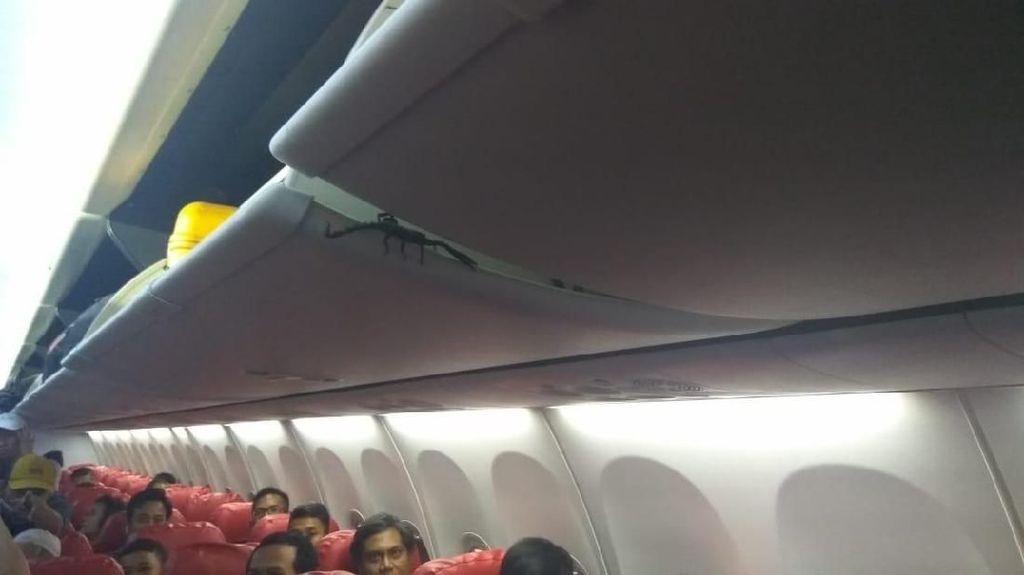 Lion Air Sebut Laba-laba, Komunitas Yakin Itu Kalajengking