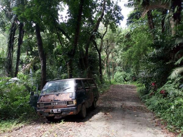 Hutan pinus di sini sangat instagenik, apalagi jika datang di pagi hari. (Aji Kusuma/detikTravel)