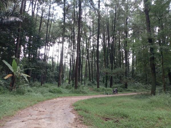 Berada di Desa Susukan, Kecamatan Ungaran Timur, Wana Wisata Penggaron menjadi tujuan tepat bagi pelancong yang doyan mengunggah foto bernuansa alam di Instagram. (Aji Kusuma/detikTravel)