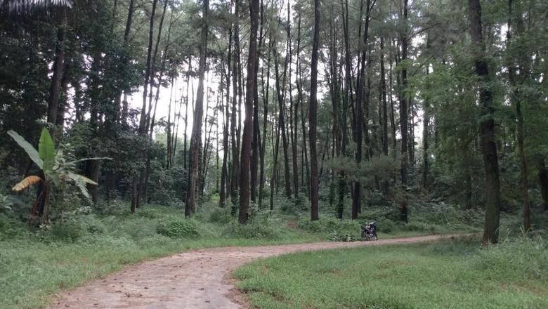 Wana Wisata Hutan Penggaron (Aji Kusuma/detikTravel)