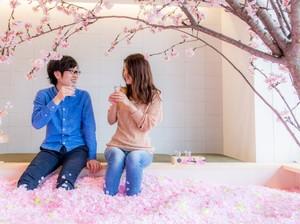 Di Bar Ini, Anda Bisa Berendam Bunga Sakura Sambil Cicip Minuman