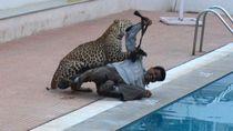 Serangan Macan Tutul Meningkat, Tapi Apakah Binatang Ini Menolong Manusia?