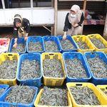 Penjelasan Lengkap KKP soal Ekspor Produk Perikanan Turun