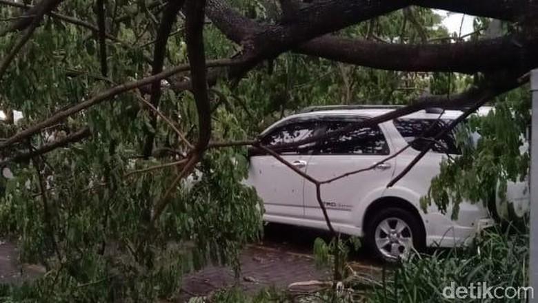 Hujan Lebat di Sukoharjo, Pohon Tumbang Timpa Mobil dan Rumah