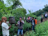 Kamuflase di Balik Ladang Ganja 1,5 Hektare di Purwakarta