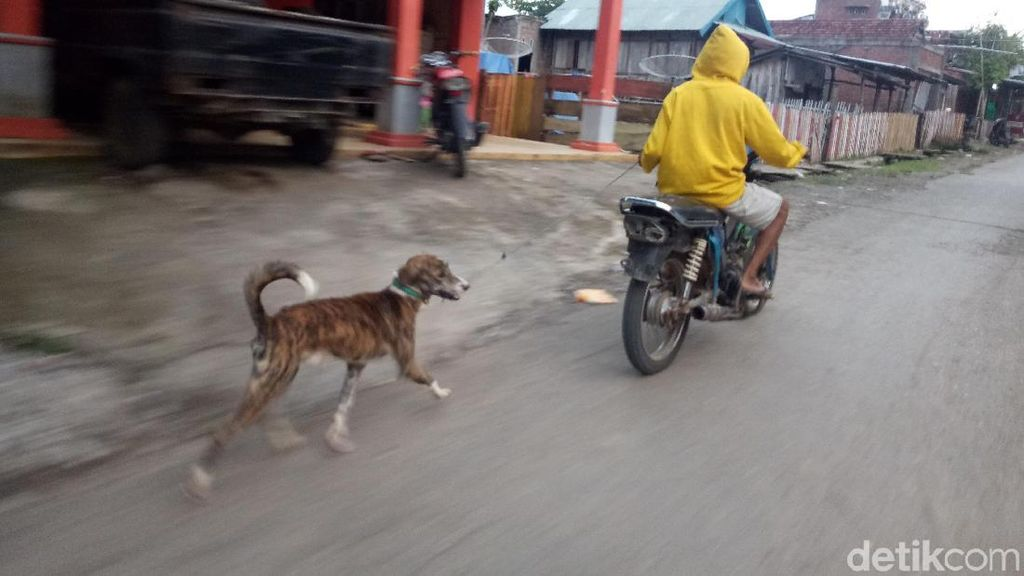 Terus Bertambah, 325 Ekor Anjing di Sumbawa NTB Sudah Dimatikan