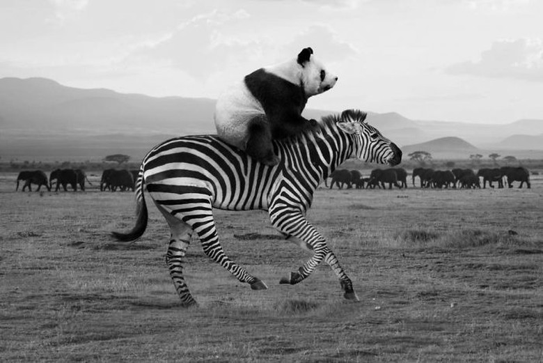 Sang fotografer bernama Thomas Subtil. Dia berasal dari Prancis. Foto: Thomas Subtil