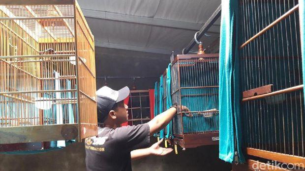 Sekolah burung kicauan di Boyolali.