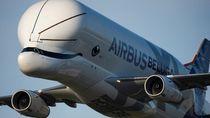 Airbus Beluga XL, Pesawat Raksasa Mirip Paus Terbang