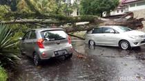 Malang Dilanda Hujan Angin, Sejumlah Pohon Tumbang Timpa Kendaraan