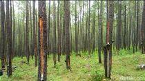 Ini Isi Perjanjian Helsinki soal Tanah untuk Kombatan GAM