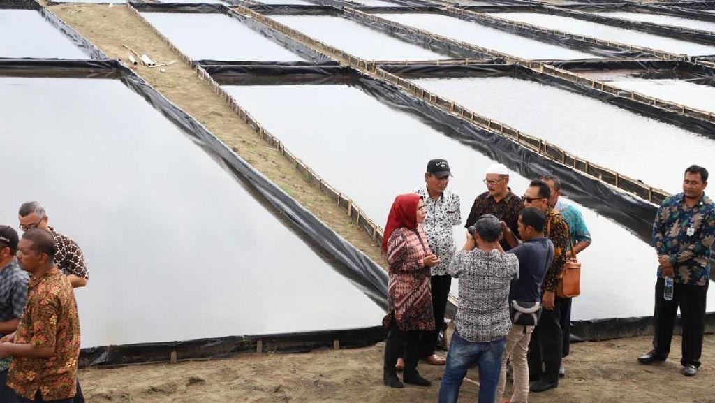 Pemkab Serang Siapkan 22 Hektare Lahan untuk Budidaya Garam
