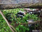 Puluhan Pohon Tumbang di Malang, Suami Istri Jadi Korban