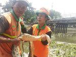 Petugas UPK Badan Air Temukan Ular Sanca 5 Meter di Kali Mookervart