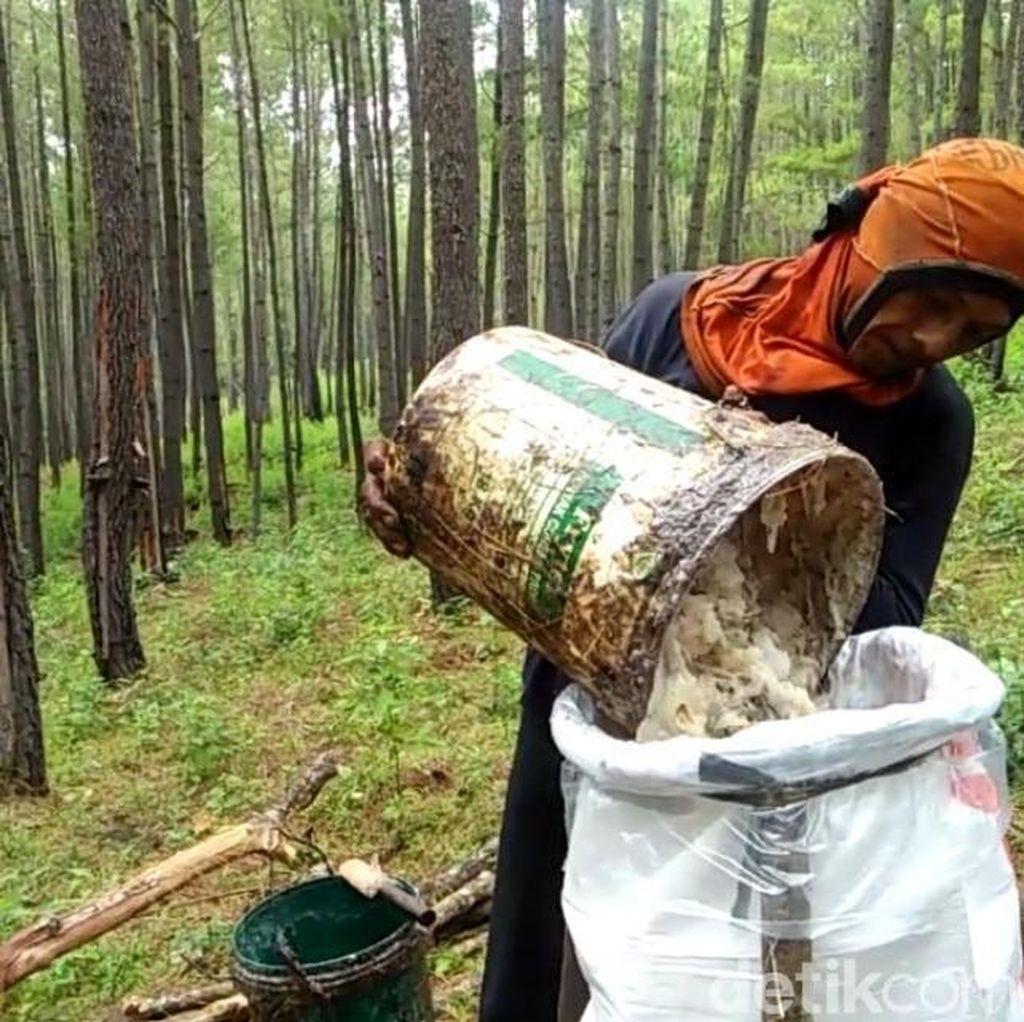 Perusahaan Prabowo di Aceh Bantah Pakai TKA: Kalau Pembeli Bisa Saja