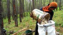 Kadis Tenaga Kerja Aceh Tengah: Tak Ada Lagi Pekerja Asing di Lahan Prabowo