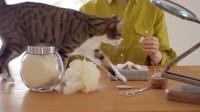 Ide tersebut muncul karena dirinya yang juga pecinta kucing.Dok. Instagram/wakuneco