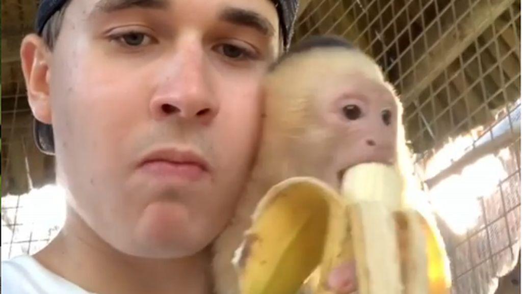 Duh Gemas! Pawang Hewan Ganteng Ini Asyik Makan Pisang Bareng 3 Monyet