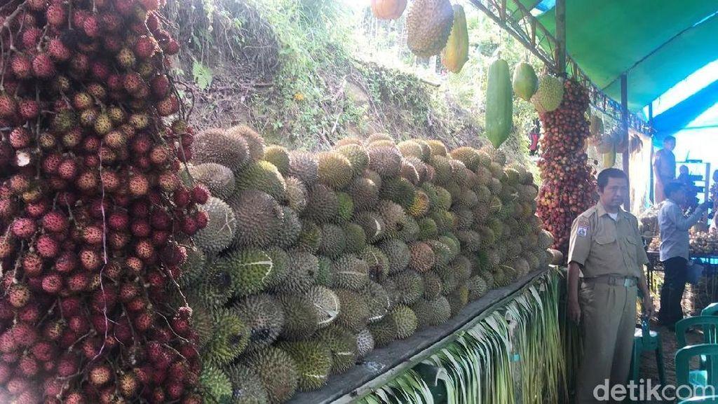 7 Durian Khas Polewali Mandar Ditampilkan Dalam Tradisi Mappaende