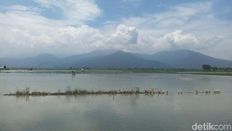 Foto: Rawa Pening (Aji Kusuma Admaja/detikTravel)